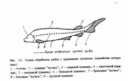 13) у рыбы вначале отделяют